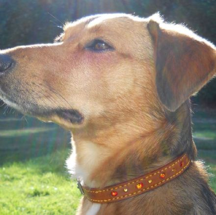 "Hand-Made TAN Leather Bridle Collar - 5/8"" Width"